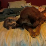 peaches the cat and cortana the dog